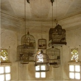 Cages, india